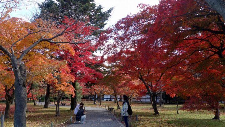 Свердловская область примет фестиваль «Японская осень на Урале»