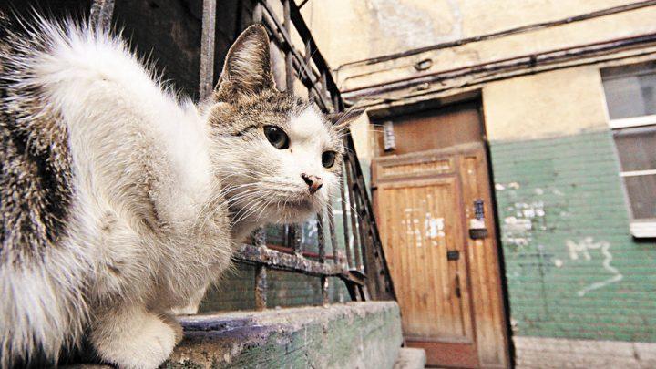 Кошкам вход разрешен Подвалы жилых домов будут держать открытыми
