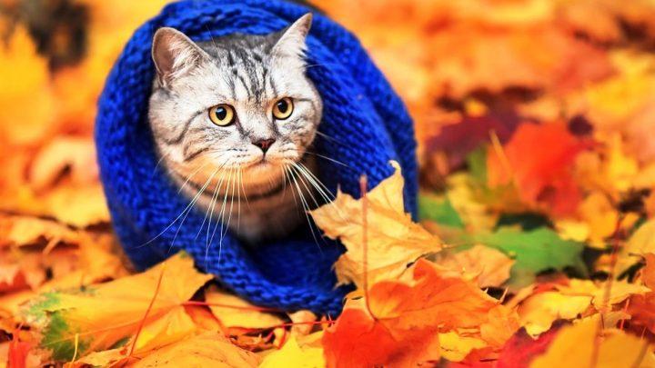 Тёплая осень?