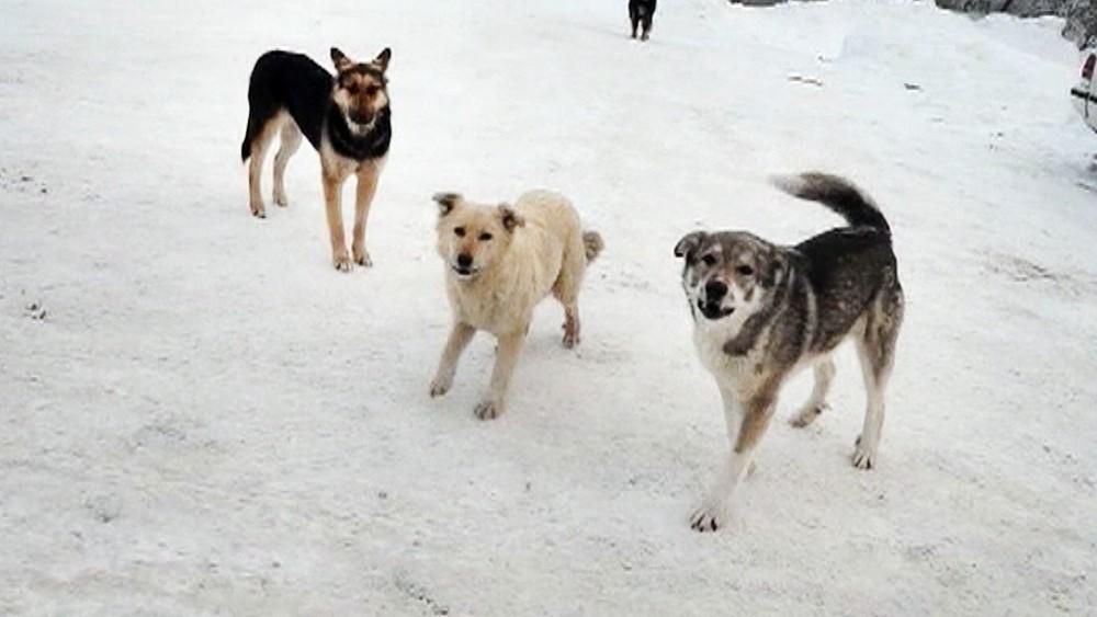Куда жаловаться на агрессивных собак?