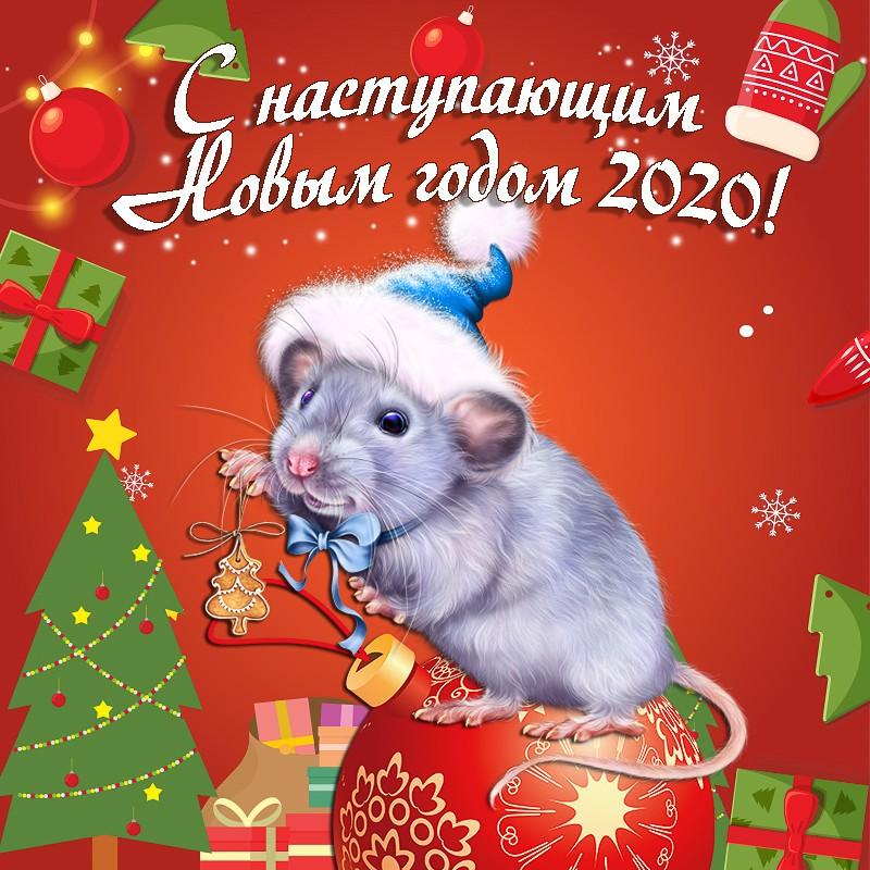фото картинки с наступающим новым годом с мышкой вид деятельности это