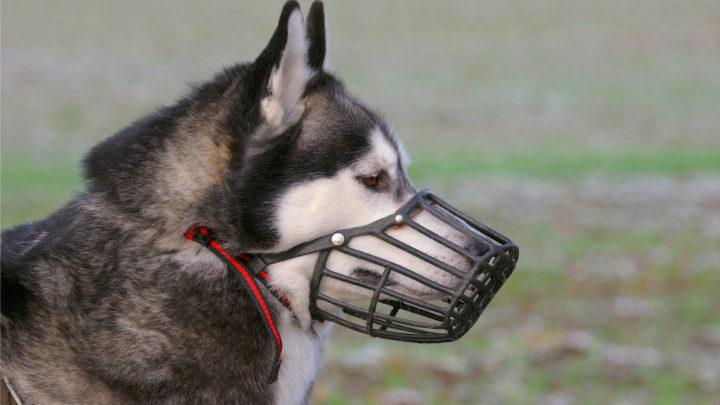 Ввели новые правила: Собаки – в намордниках, зоопарки без контакта