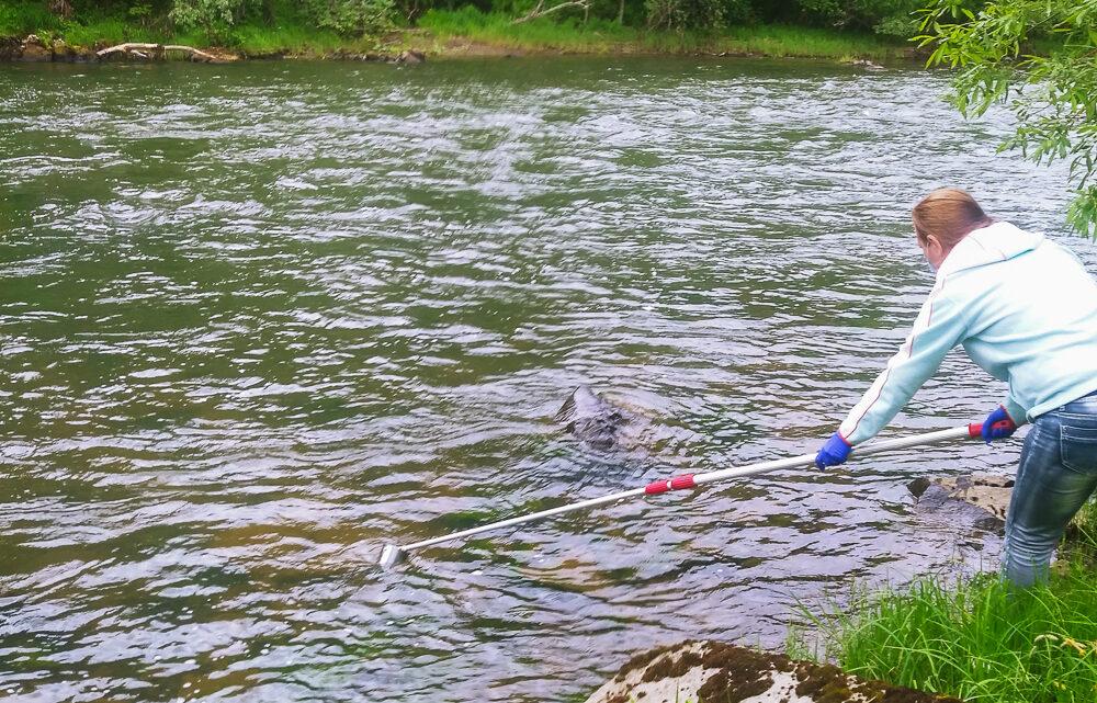 Воде – пристальное внимание «Святогор» продолжает вести систематический мониторинг качества воды в реке Ивдель
