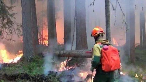 Специалисты локализовали половину действующих на Среднем Урале лесных пожаров