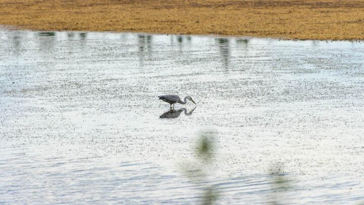 Странные птицы на пруду