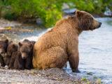 Медведи в городе. Что делать?
