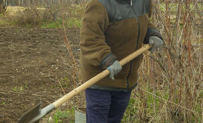 Послесловие к дачному сезону Опустели сады. До весны распрощались дачники. Замечательную тёплую, долгую осень подарила природа в этом году, как будто всеми силами старалась помочь нам без суеты и спешки завершить все работы в садах