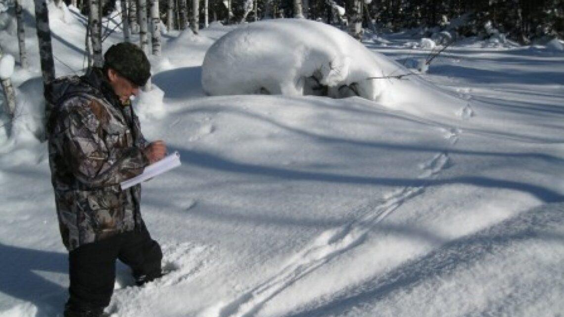 В Свердловской области начался зимний подсчет диких животных по следам на снегу, охотинспекторы пройдут не менее 30 тысяч километров
