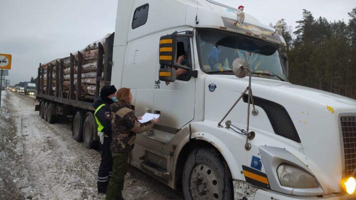 В Свердловской области снизился объём незаконных рубок леса