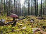На севере области появится природный парк