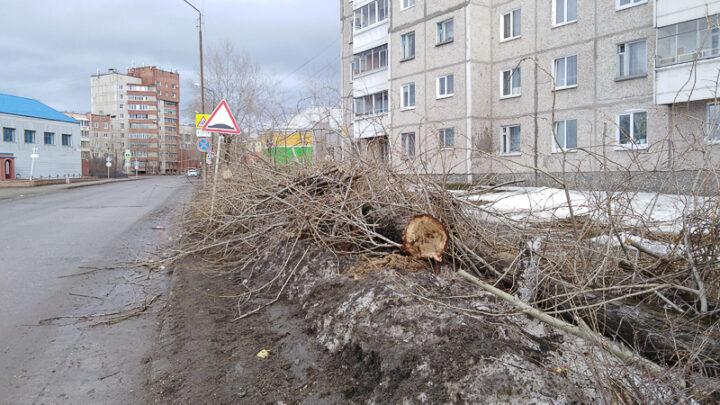 «Давайте жить в ногу со временем» Реконструкция дороги по Каржавина требует вырубки старых деревьев