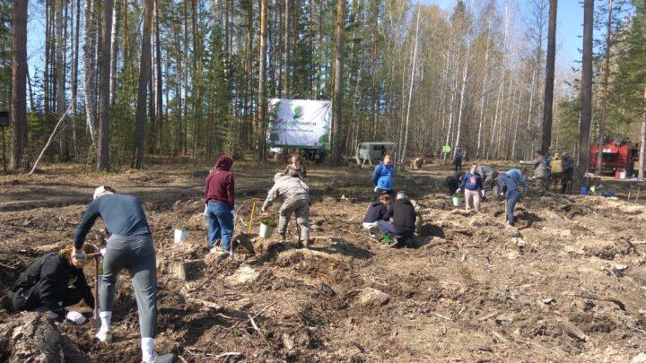 Свердловчане пополнили «Сад памяти» еще на 9 тысяч деревьев