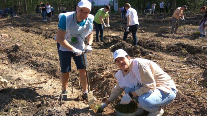 На центральной площадке «Сада памяти» Свердловской области высадили 12 тысяч сосен