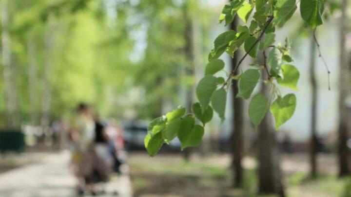 В поселке Малышева открылся реконструированный по нацпроекту «Жилье и городская среда» парк культуры и отдыха