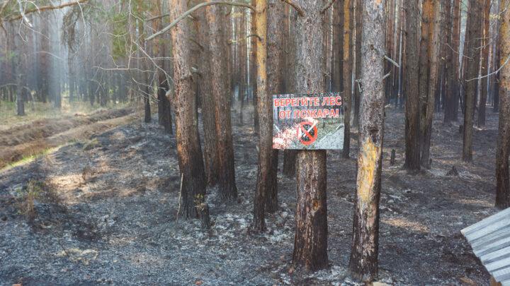 За выходные в лесах Свердловской области было потушено более 30 лесных пожаров