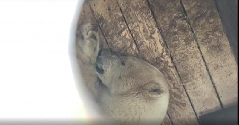 Спасти медведицу!