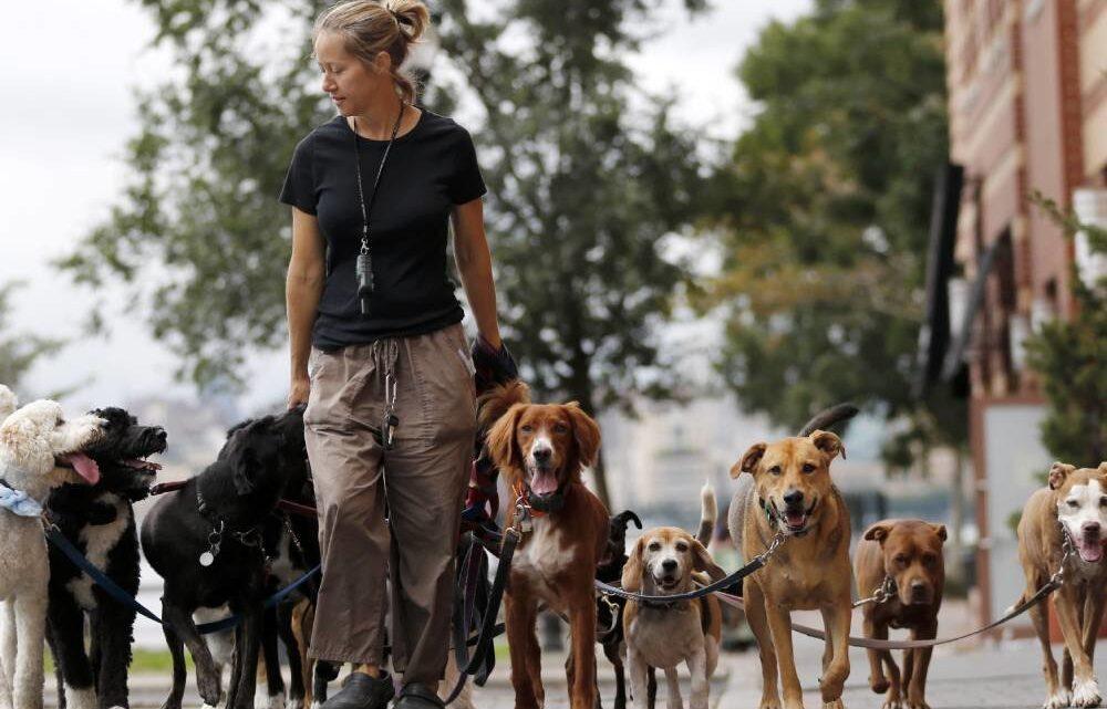 Местные власти смогут устанавливать предельное число домашних животных