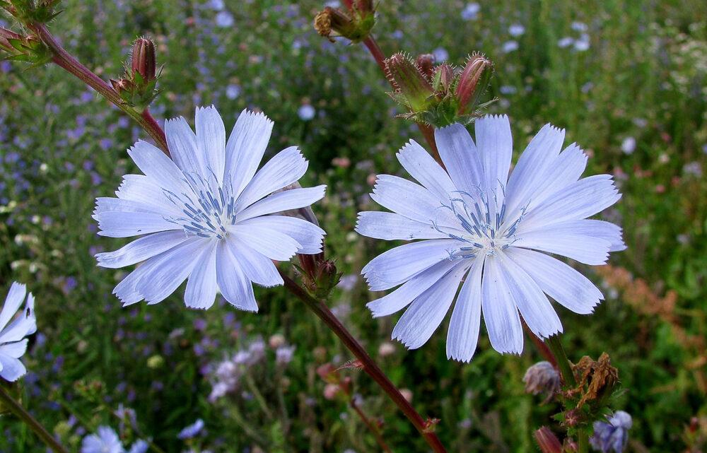 Лекарственные растения Североуральска: первая помощь